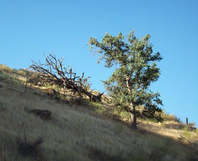 deadtree2