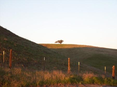 one tree sunrise_small
